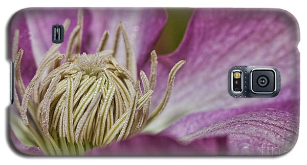 Simple Clematis Galaxy S5 Case by Laurinda Bowling