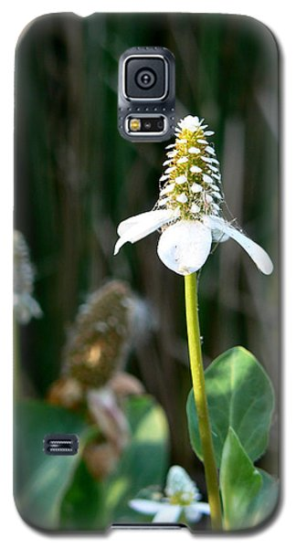 Galaxy S5 Case featuring the photograph Simple Flower by Laurel Powell
