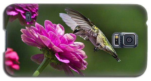 Simple Pleasure Hummingbird Delight Galaxy S5 Case by Christina Rollo