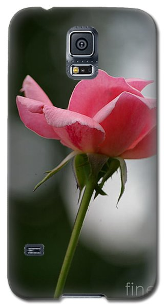 Galaxy S5 Case featuring the photograph Simple Rose by Tannis  Baldwin