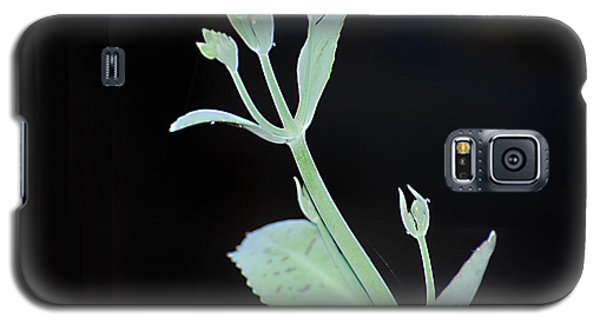 Galaxy S5 Case featuring the photograph Simplicity by Linda Cox
