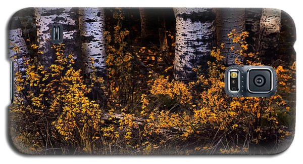 Simplicity Galaxy S5 Case by The Forests Edge Photography - Diane Sandoval