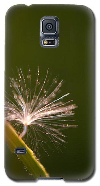 Simpliest Beauty Galaxy S5 Case