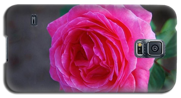 Simply A Rose Galaxy S5 Case by Angela J Wright