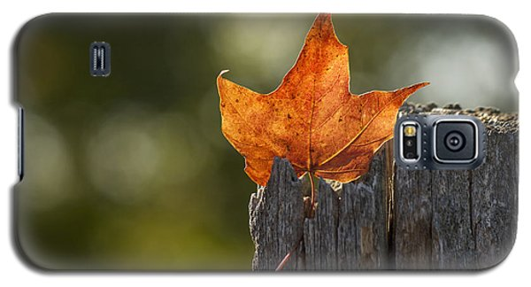 Simply Autumn Galaxy S5 Case by Penny Meyers