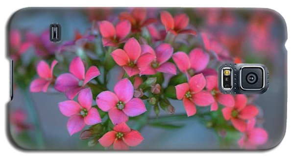 Galaxy S5 Case featuring the photograph Simply Kalanchoe by Penni D'Aulerio