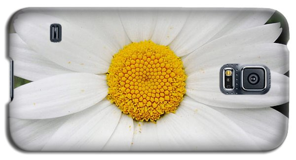 Galaxy S5 Case featuring the photograph Simply by Natalie Ortiz