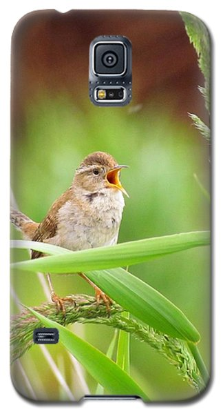Singing For A Companion Galaxy S5 Case by I'ina Van Lawick