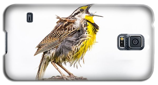 Singing Meadowlark 3rd Of 3 Galaxy S5 Case