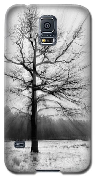 Single Leafless Tree In Winter Forest Galaxy S5 Case