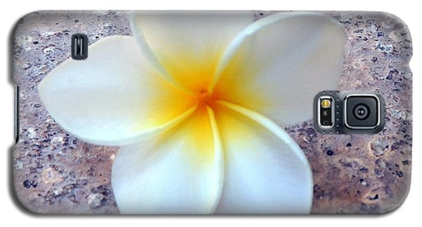 Single Plumeria Galaxy S5 Case