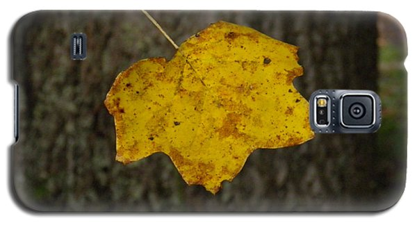 Galaxy S5 Case featuring the photograph Single Poplar Leaf by Nick Kirby