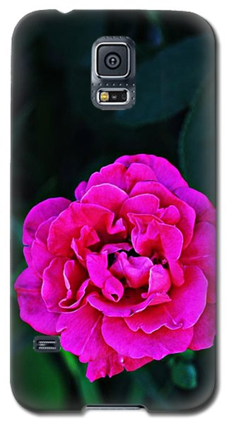 Single Rose Galaxy S5 Case