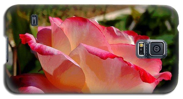 Single Rose Galaxy S5 Case by Pamela Walton