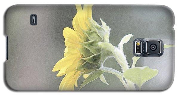 Single Sunflower Galaxy S5 Case