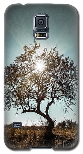 Single Tree Galaxy S5 Case by Carlos Caetano