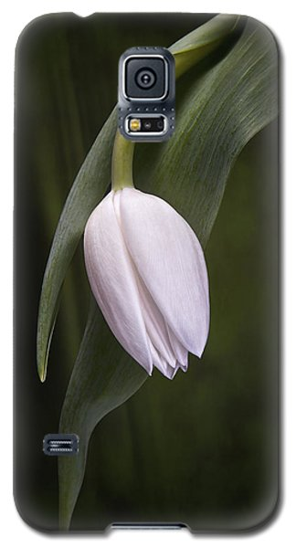 Single Tulip Still Life Galaxy S5 Case by Tom Mc Nemar