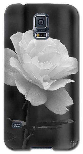 Single White Rose Galaxy S5 Case