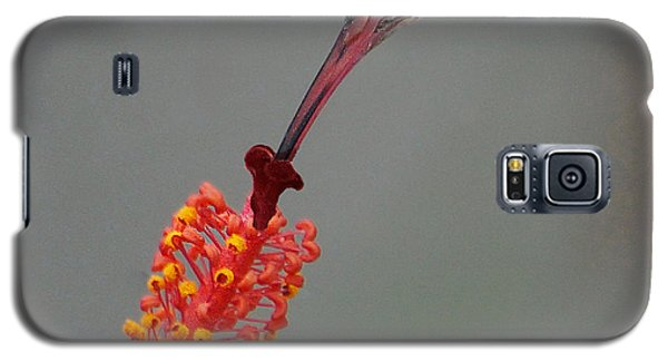 Sipping From A Hibiscus Galaxy S5 Case