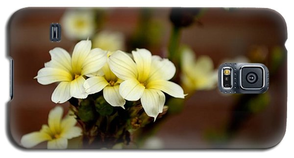 Sisyrinchium Striatum Galaxy S5 Case