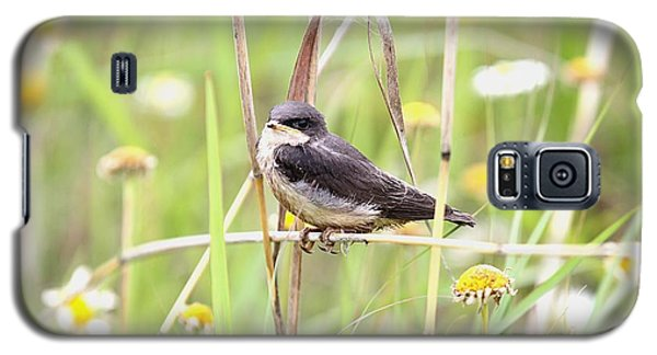 Galaxy S5 Case featuring the photograph Sitin' Pretty by Elizabeth Winter