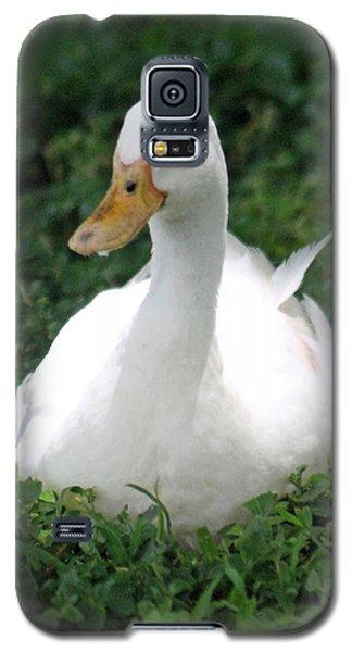 Sitting Duck Galaxy S5 Case by Pamela Walton