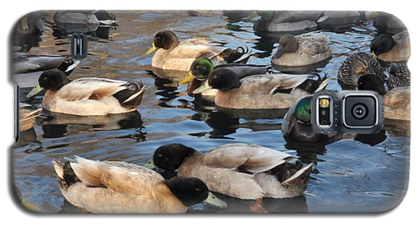 Galaxy S5 Case featuring the photograph Sitting Ducks by Diane Lent