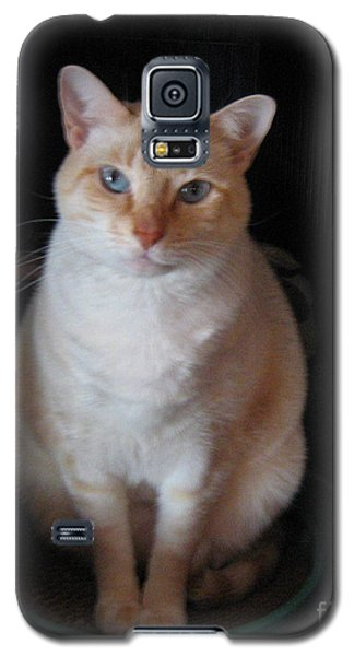 Galaxy S5 Case featuring the photograph Sitting Pretty by Wendy Coulson
