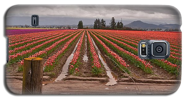 Galaxy S5 Case featuring the photograph Skagit Valley Tulip Farmlands In Spring Storm Art Prints by Valerie Garner