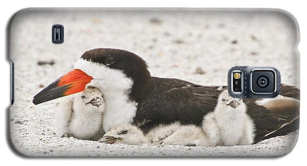 Skimmer Family Cuddle Galaxy S5 Case