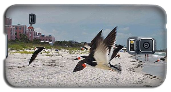 Black Skimmers At Don Cesar Galaxy S5 Case