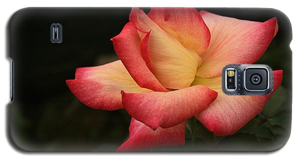 Skc 0432 Blooming And Blossoming Galaxy S5 Case