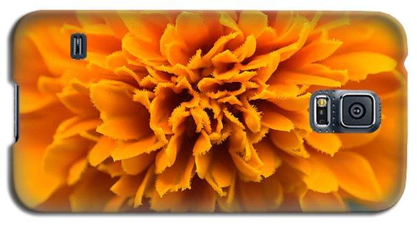 Skunk Flower Orange Galaxy S5 Case