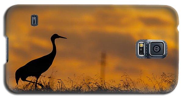 Sky Gold Galaxy S5 Case