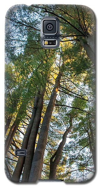 Skyward Trees Galaxy S5 Case by Dawn Romine
