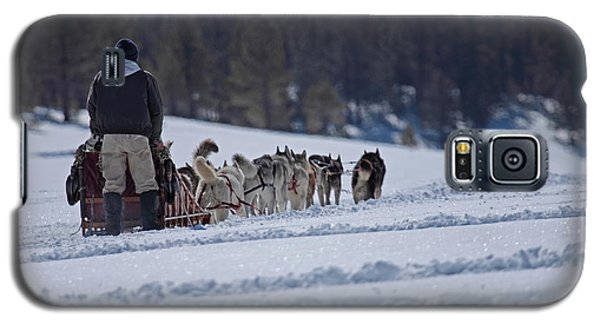 Galaxy S5 Case featuring the photograph Sled Dog  by Duncan Selby