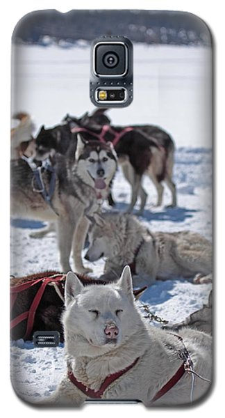 Galaxy S5 Case featuring the photograph Sled Dogs by Duncan Selby