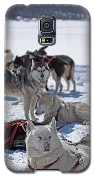 Sled Dogs Galaxy S5 Case by Duncan Selby