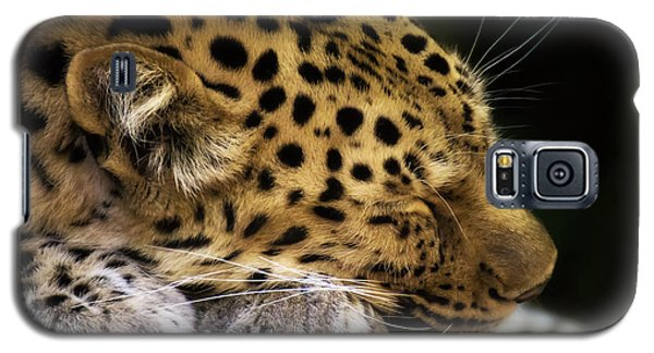 Sleeping Amur Leopard Galaxy S5 Case