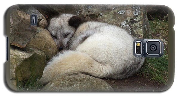 Sleeping Arctic Fox Galaxy S5 Case