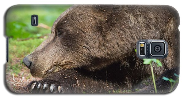 Sleeping Bear Galaxy S5 Case by Chris Scroggins