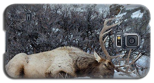 Sleeping Elk Galaxy S5 Case