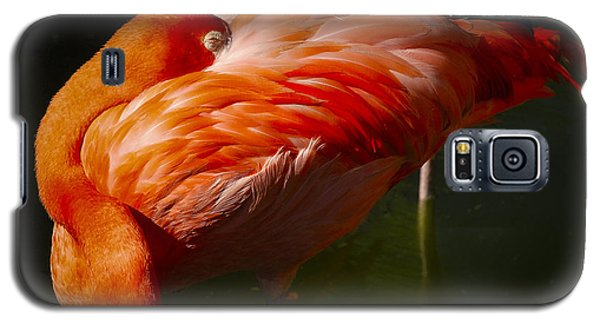 Galaxy S5 Case featuring the photograph Sleeping Flamingo by Phil Abrams