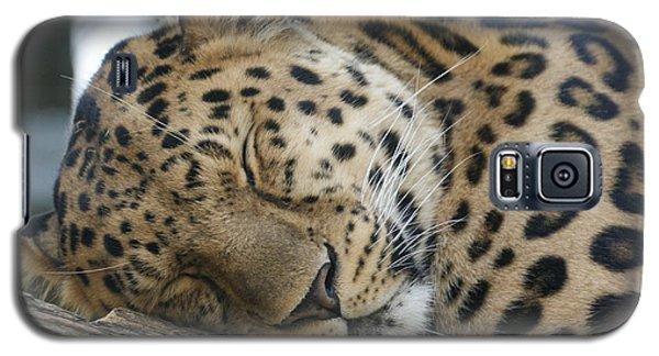 Sleeping Leopard Galaxy S5 Case