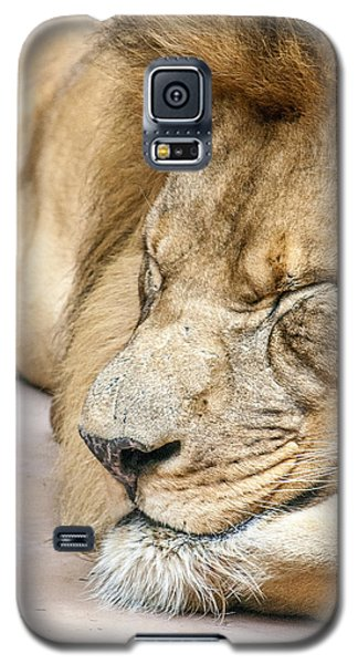 Sleeping Lion Galaxy S5 Case by Dawn Romine