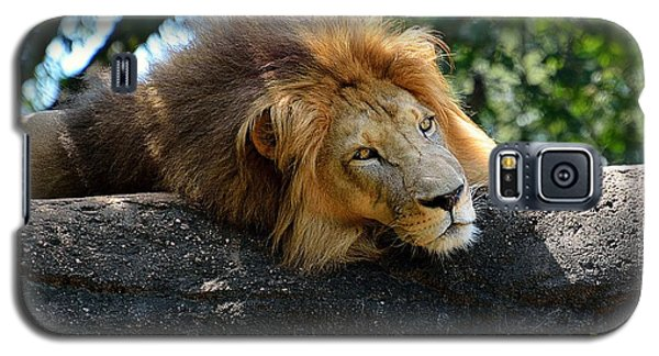 Galaxy S5 Case featuring the photograph Thinking Lion by Lisa L Silva