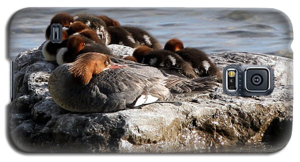 Sleeping Mergansers Galaxy S5 Case
