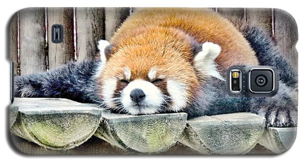 Sleeping Red Panda Bear Galaxy S5 Case