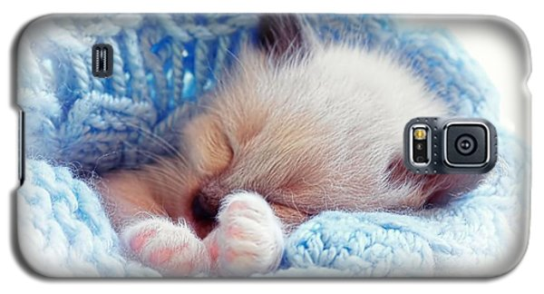 Galaxy S5 Case featuring the photograph Sleeping Siamese Kitten by Tracie Kaska