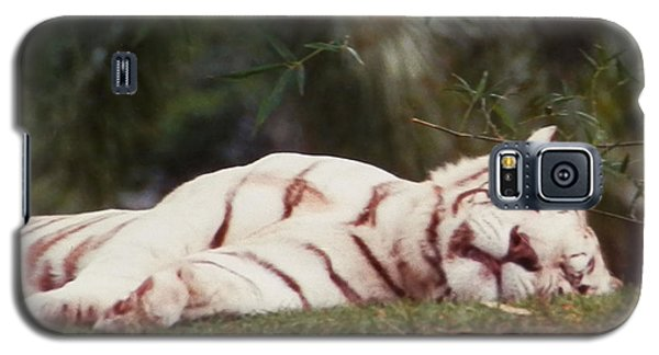 Sleeping White Snow Tiger Galaxy S5 Case by Belinda Lee